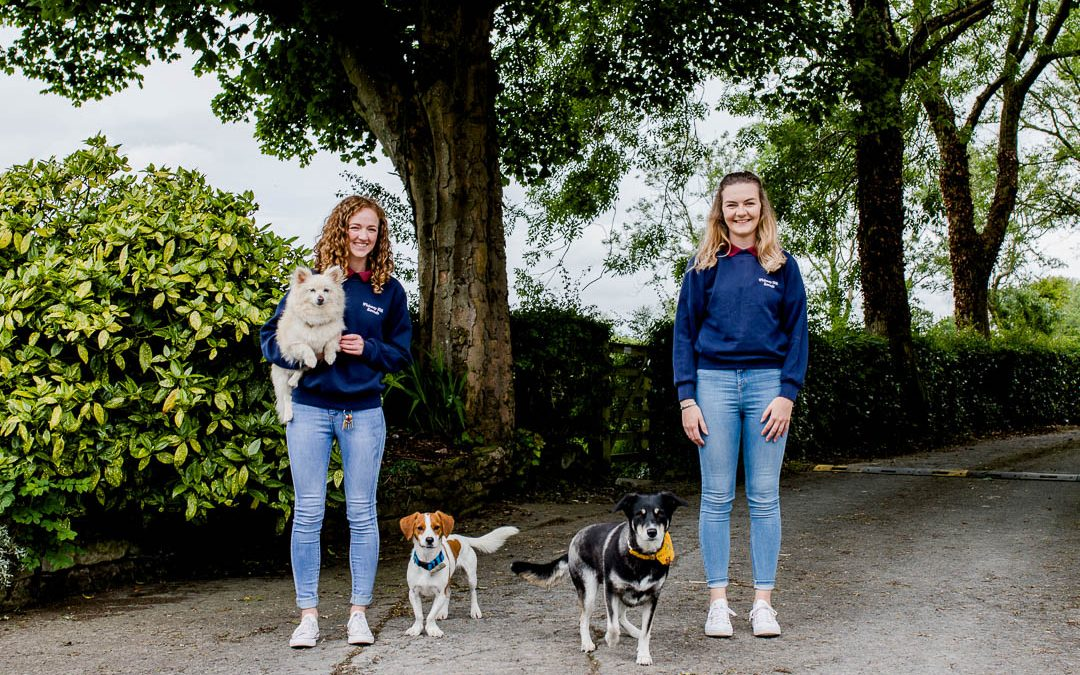 Back to Business Doorstep Portraits: Whinney Hill Kennels & Well Groomed Dog Studio
